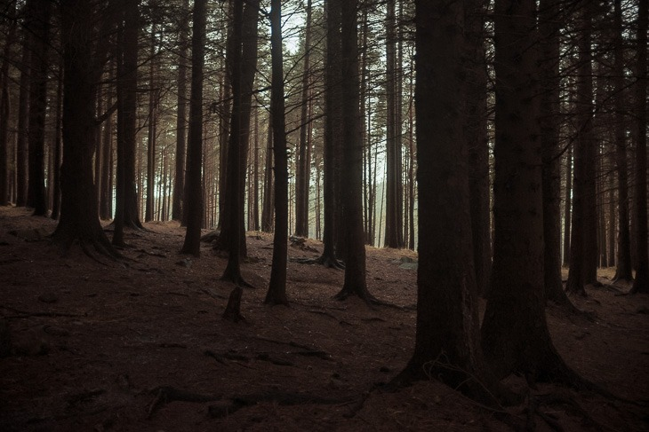 Mourne Forest