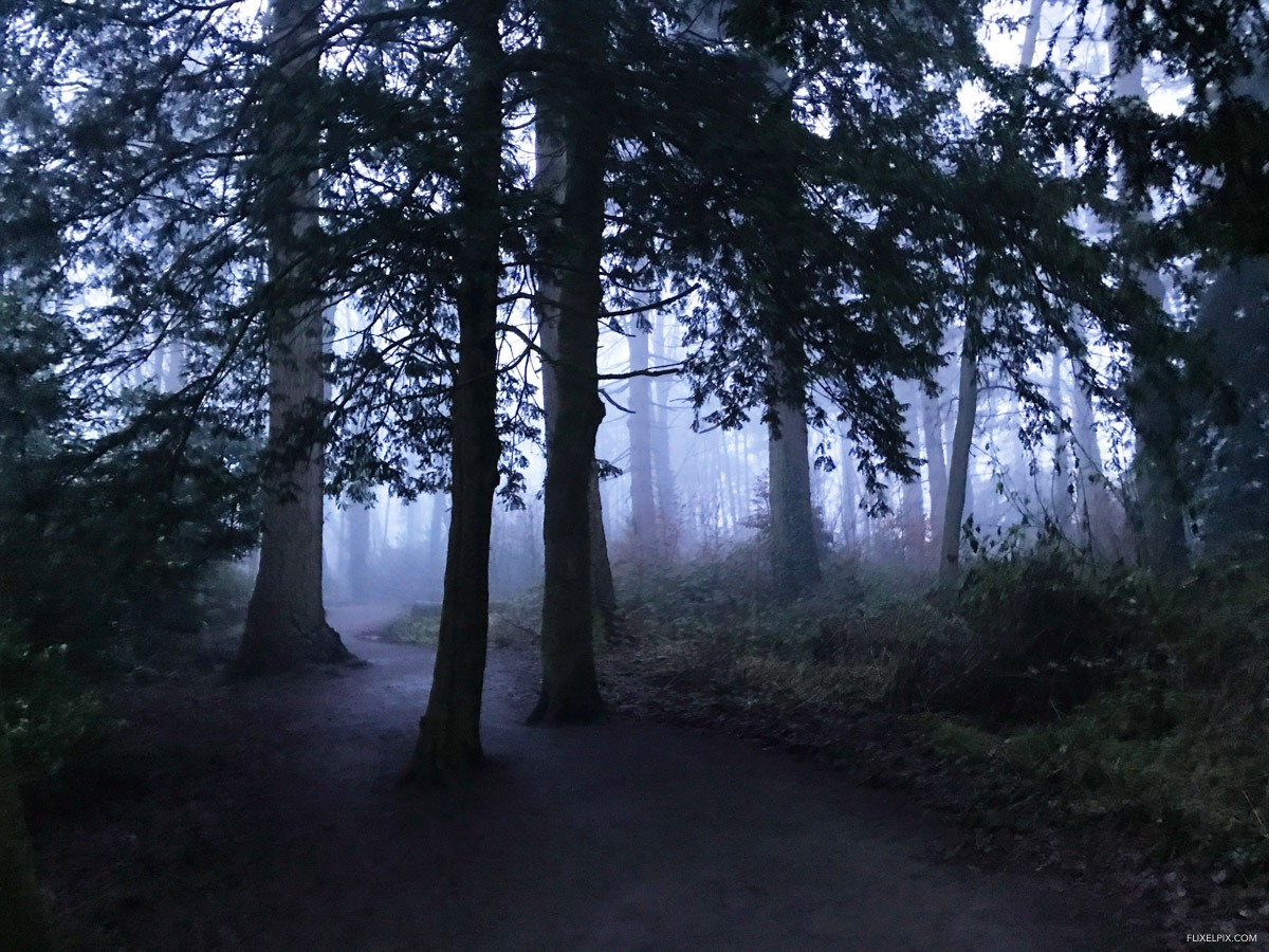 Hillsborough Forest Fog